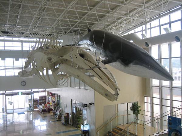 4.鯨賓館ミュージアム